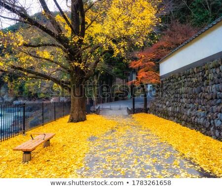 秋 葉 公園 メイプル ニレ ツリー ストックフォト © davidgn