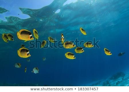 воды рыбы синий жизни тропические Сток-фото © stephankerkhofs