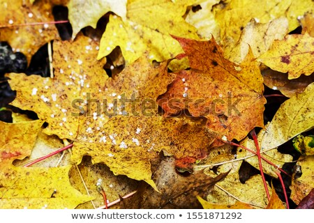 Hail on the ground with fallen leaves Stock photo © vetdoctor