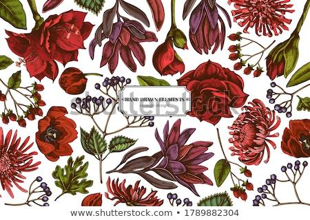 цветок · изолированный · белый · красный · Лилия · карнавальных - Сток-фото © compuinfoto