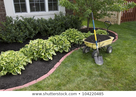 Mulching around the Bushes stock photo © ozgur