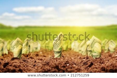 Money Crop Stock photo © Lightsource