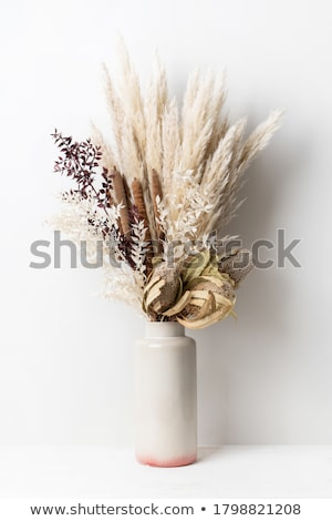 Dried flowers in vase Stock photo © sdenness