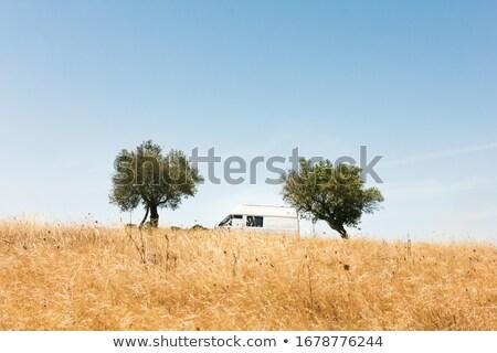 Göl köy ağaç doğa manzara mavi Stok fotoğraf © inaquim