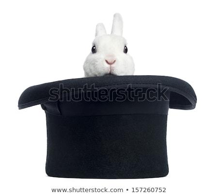 büyü · tavşan · beyaz · üst · şapka · 3d · illustration - stok fotoğraf © kirill_m