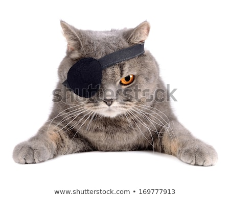 one eyed pirate isolated on the white stock photo © elnur