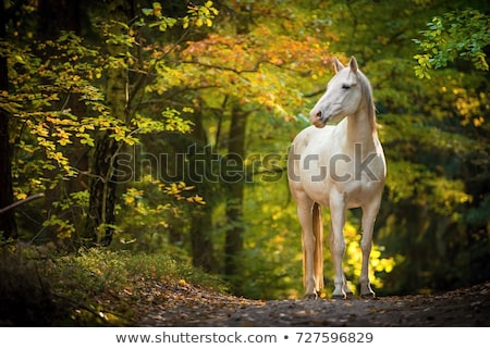 white horse grazing stock photo © rhamm