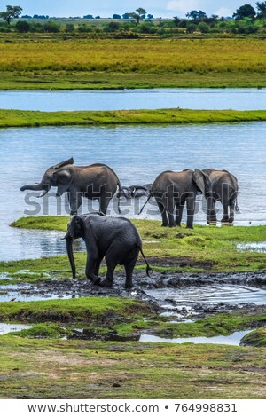 Elephant Lodge in Botswana Stock photo © prill