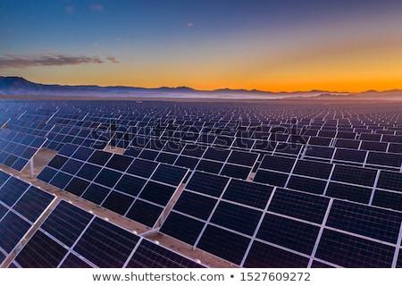 solar plant stock photo © pedrosala
