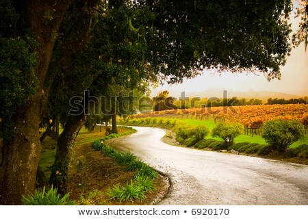Country lane in the vineyards Stock photo © Zerbor