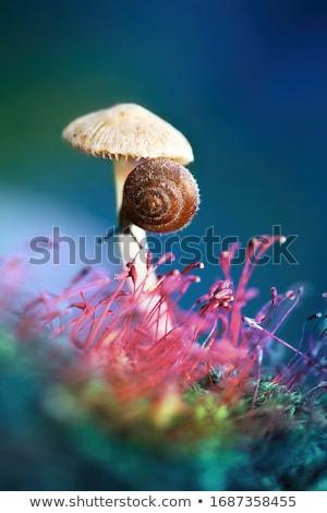 Grzyb ilustracja drewna lasu cool grzyby Zdjęcia stock © adrenalina
