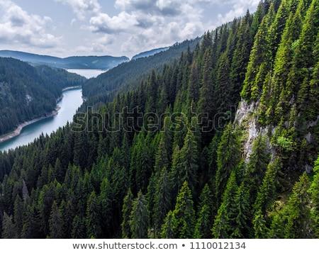 山 風景 森林 午前 スロープ ストックフォト © Kotenko