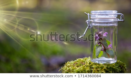 Single Homeopathic Remedy Bottle Stock photo © ca2hill
