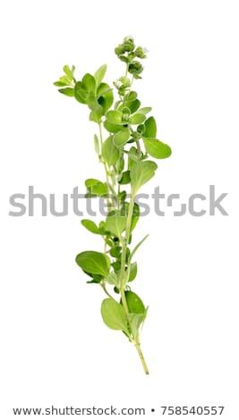 Taze keklikotu gıda yeşil yaprakları Stok fotoğraf © Digifoodstock