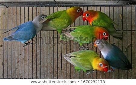 Verde loro jaula ojo aves retrato Foto stock © ankarb