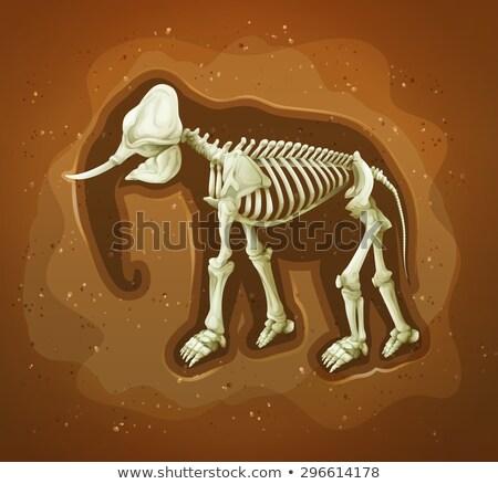 Fossiel achtergrond kunst schedel vuil tekening Stockfoto © bluering