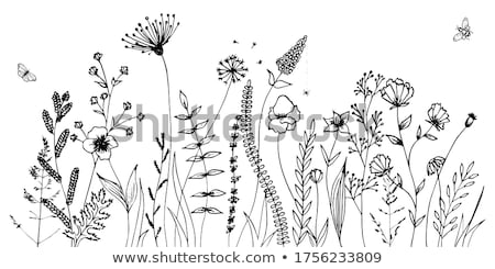 vector drawing with flowers and insects stock photo © phantom1311