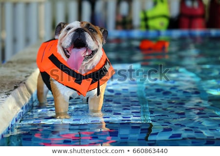 swimming dog with life jacket Stock photo © BrandonSeidel