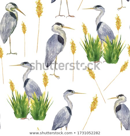 Blue crane standing in the grass. stock photo © simoneeman