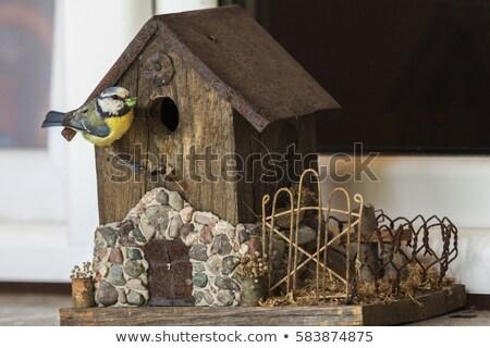 Chickadee bringing food to birdhouse Stock photo © benkrut