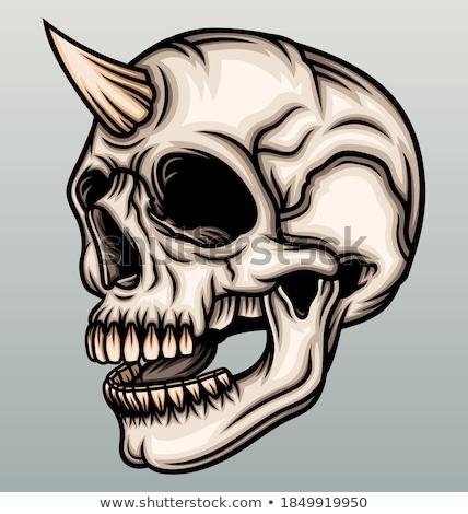Skull and horns Stock photo © Kidza