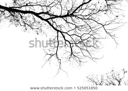bare tree on sky background Stock photo © wildman