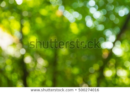 Stockfoto: Blurred Green Foliage With Sunlight Natural Background With Yellow Bokeh Circles
