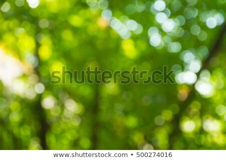 Stok fotoğraf: Bulanık · yeşil · yeşillik · güneş · ışığı · doğal · sarı