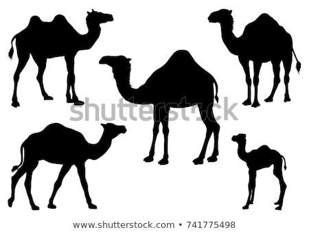 camelo · ícone · silhueta · projeto · símbolo - foto stock © netkov1