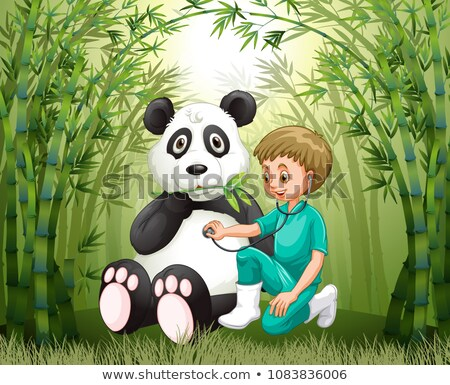 Veterinarian Doctor And Panda in Bamboo Forest Stock photo © colematt