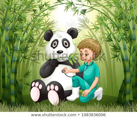 Veterinarian Doctor And Panda in Bamboo Forest Stock photo © colematt