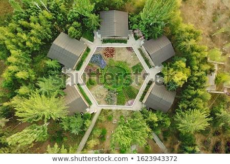 Luchtfoto tuin illustratie boom groene grafische Stockfoto © bluering