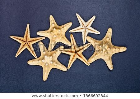 Top zes zeester zwarte exemplaar ruimte Stockfoto © marylooo