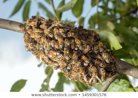 Arılar kovan oturma ağaç Stok fotoğraf © leedsn