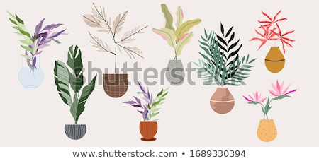 Saksı ekolojik bitki Stok fotoğraf © robuart