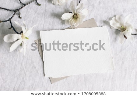 Magnolia flowers flat lay scene Stock photo © neirfy