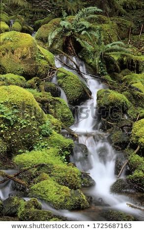 Kicsi folyam esőerdő alsónadrágok fák víz Stock fotó © HerrBullermann