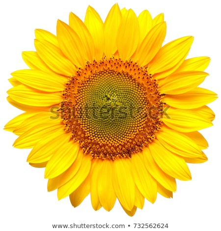солнце цветок красивой красный желтый подобно Сток-фото © Alvinge