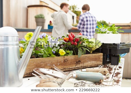 Male gardener potting plants Stock photo © photography33