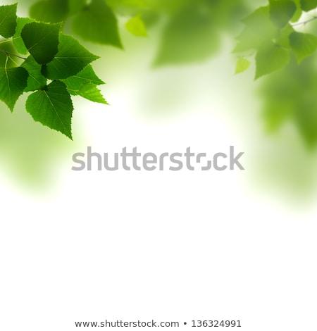 листва · абстракция · аннотация · природы · завода - Сток-фото © sandralise