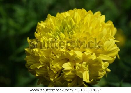 oală · plantă · floare · flori · frunze - imagine de stoc © lianem