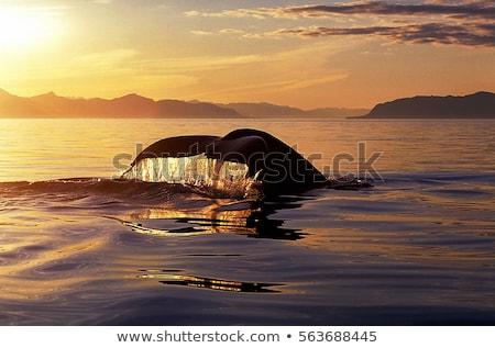 Arany naplemente Alaszka nap levél zöld Stock fotó © jaymudaliar
