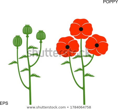 Green poppy heads Stock photo © hraska
