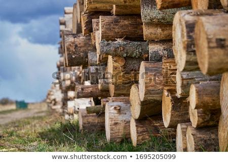 Tarcica drzewo lasu drewna środowiska kółko Zdjęcia stock © badmanproduction