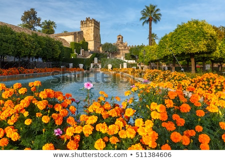 The gardens of the Alcazar of Catholic Kings, Cordoba, Andalusia Stock photo © phbcz