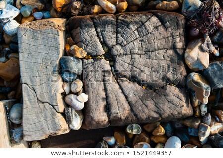 Troncos areia textura madeira mar branco Foto stock © Nelosa