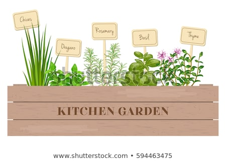 wooden container with fresh herbs Stock photo © compuinfoto