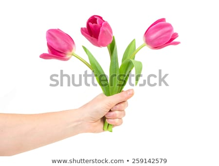 beautiful young girl with tulipsisolated on a white background stock photo © pandorabox