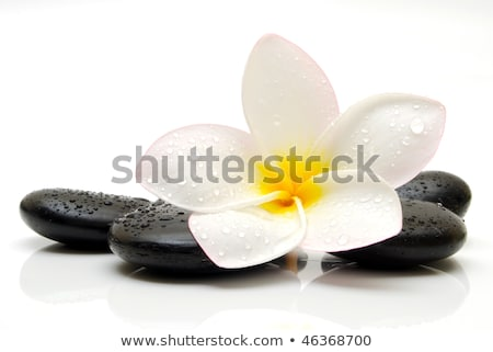 Spa Stones With Frangipani Flower. Stock photo © HelenStock