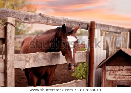 Horse behind the Fence stock photo © Kayco